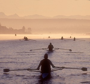 singles rowers in foreground—notice squarish, symmetrical oar shapes