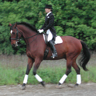Fiona and Digger cantering