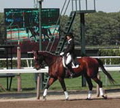 on the track at Belmont Park