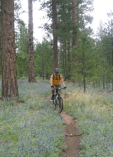 Gary in the Kaibab Forest near the Grand Canyon