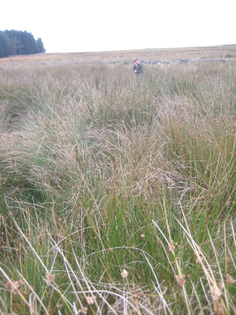 tall grasses concealing rough ground