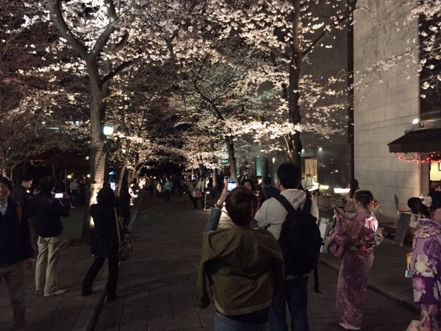 Shinbashi Street is lit up at night for more cherry-blossom viewing